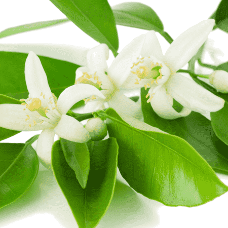 Neroli Egypt Essential Oil