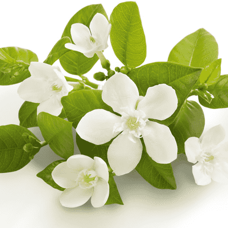 Neroli Natural Blend Essential Oil