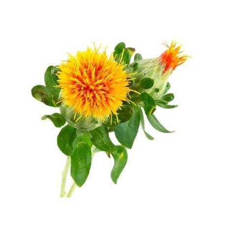 Safflower Carrier Oil