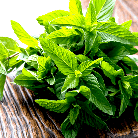 Spearmint Organic Essential Oil