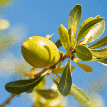 Argan Carrier Oil - Virgin - Deodorized