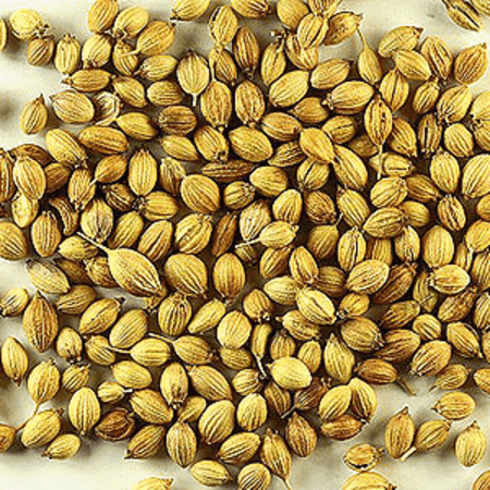 Coriander Seed Spice Oil