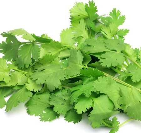 Coriander Essential Oil Egypt