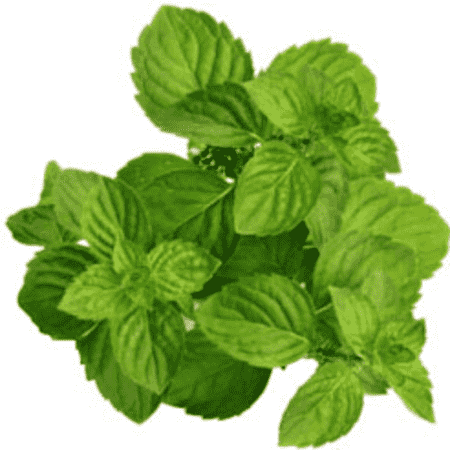 L-Menthol 38-40% TMC 50% Peppermint Products Oils