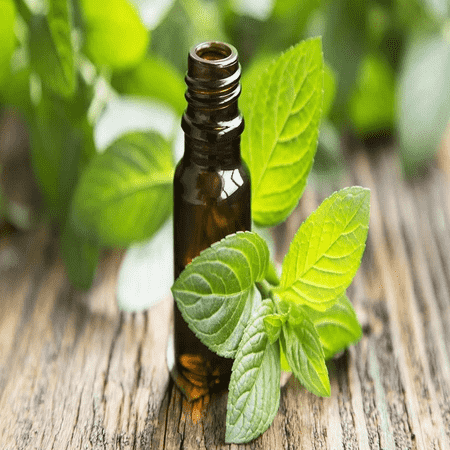 Peppermint Oil 95%