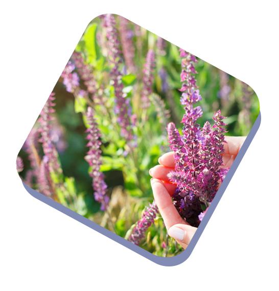 Essential Oils Manufacturer & Supplier - Kush Aroma Exports